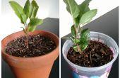 Cómo cultivar árboles de Manzano de semilla