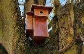 Frambuesa con cam en comedero para pájaros de