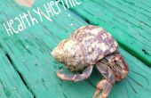 Cómo echar a perder tus cangrejos ermitaños: alimentos edición