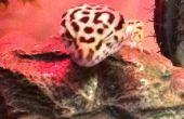Correa de Gecko con arnés
