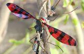Insecto electromecánico o aleteo oscilador