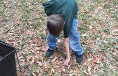 Recogida en el musgo y las ramitas sin romper tu espalda
