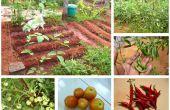 Cultivo de un pequeño huerto en su patio trasero