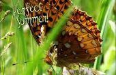 Cómo hacer un verano perfecto para miles de niños