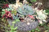 BRICOLAJE jardín de suculentas de vidrio colgante