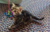 La bola de brillo - para los gatos
