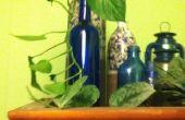 Planta en una botella