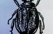Dibujado en los zapatos de escarabajo