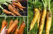Cómo cultivar un jardín de interior