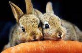 Cómo mantener los conejos comiendo verduras de su jardín cultivos.