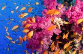 Destrucción de arrecife es ecológica