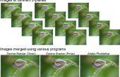 Foco unidad (z) para focus stacking microfotografía