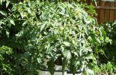 Cultivos hidropónicos con recirculación