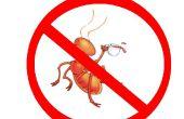 Cómo matar hormigas