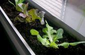 Cultivar hortalizas en el interior durante el invierno