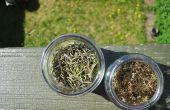 Casa procedente de especias (hierbas secas hacia fuera)
