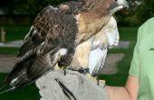 Manejo de aves rapaces silvestres -