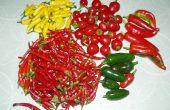 Preservación de chiles: Jam, escamas, polvo