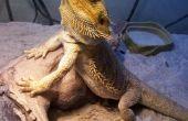 Cómo hacer ensalada para dragones barbudos