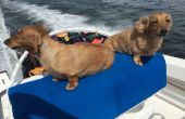 Bimini estilo perro barco asiento (máximo de $25, 1 hora)