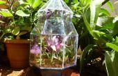 Terrario de vidrio: Un fin de semana proyecto