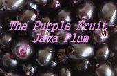 La ciruela púrpura fruta-Java