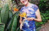 Cuidado de plantas de ave del paraíso