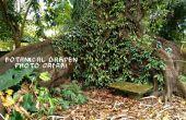 Jardín Botánico foto Safari: Embolsado las mejores fotos