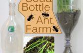 ¿Refresco botella Ant Farm