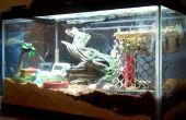 Cómo hacer un hábitat del cangrejo ermitaño