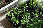 Jardinería interior orgánico