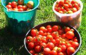 Vegetales jardín riego sistema reconfigurable