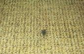 Reparación de quemadura de cigarrillo en alfombras