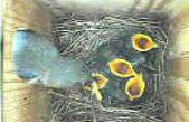 Caja nido para pájaros con WEBCAM
