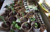 A partir de la semilla: un estudio comparativo de métodos baratos de interior