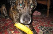 Cómo comer una Banana como un perro