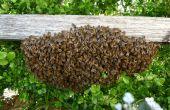 Recoger un enjambre de abejas