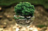 Cómo ayudar al medio ambiente