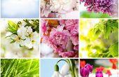 Mejor jardín las plantas crecer en temporada de invierno