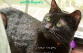 Propiedad de gato adecuado, cuidado, entrenamiento, consejos y trucos