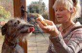 Los perros y los fuegos artificiales - con Ulrike y Lizzie