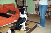 Trata de formación de perro hecha en casa
