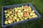 Jugo de manzana DIY