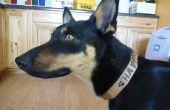 Collar de perro de cartón