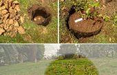 Plantación de árboles frutales en alquiler