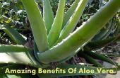 Asombrosos beneficios del Aloe Vera