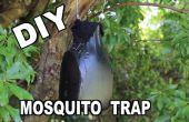 Cómo hacer un Ovitrap Mosquito trampa