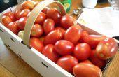 Conservas tomates = verano lo largo del año!