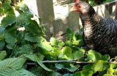 Coberturas comestibles - aprovechar al máximo su trama con forraje de árbol y árbol heno