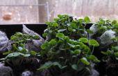 Jardinería orgánica ventana